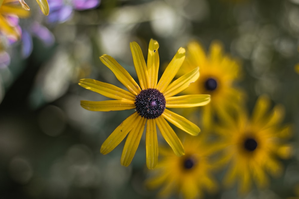 selective-focus photography of yellow petaled flower