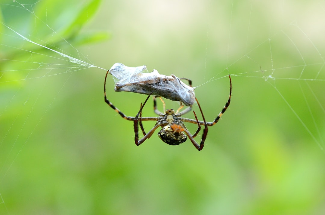 Maryland Spiders Spiders are air-breathing arthropods that have eight legs and chelicerae with fangs that inject venom. They are the largest order of arachnids and rank seventh in total species diversity among all other orders of organisms.