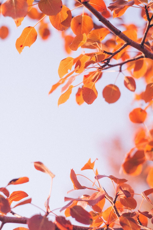 orange-leafed tree