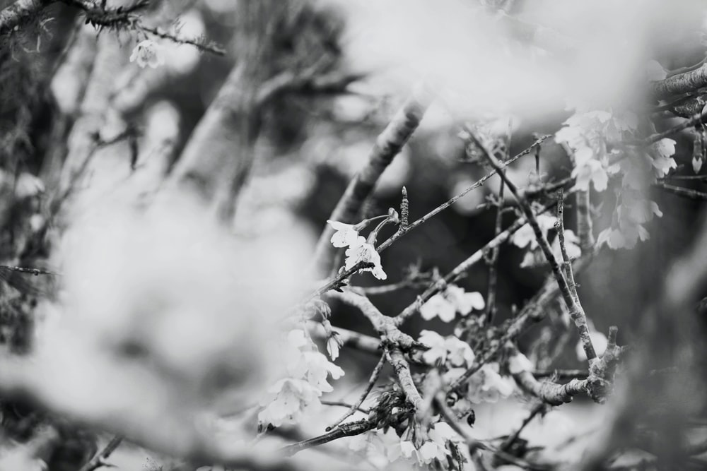 grayscale photo of snow-covered tree