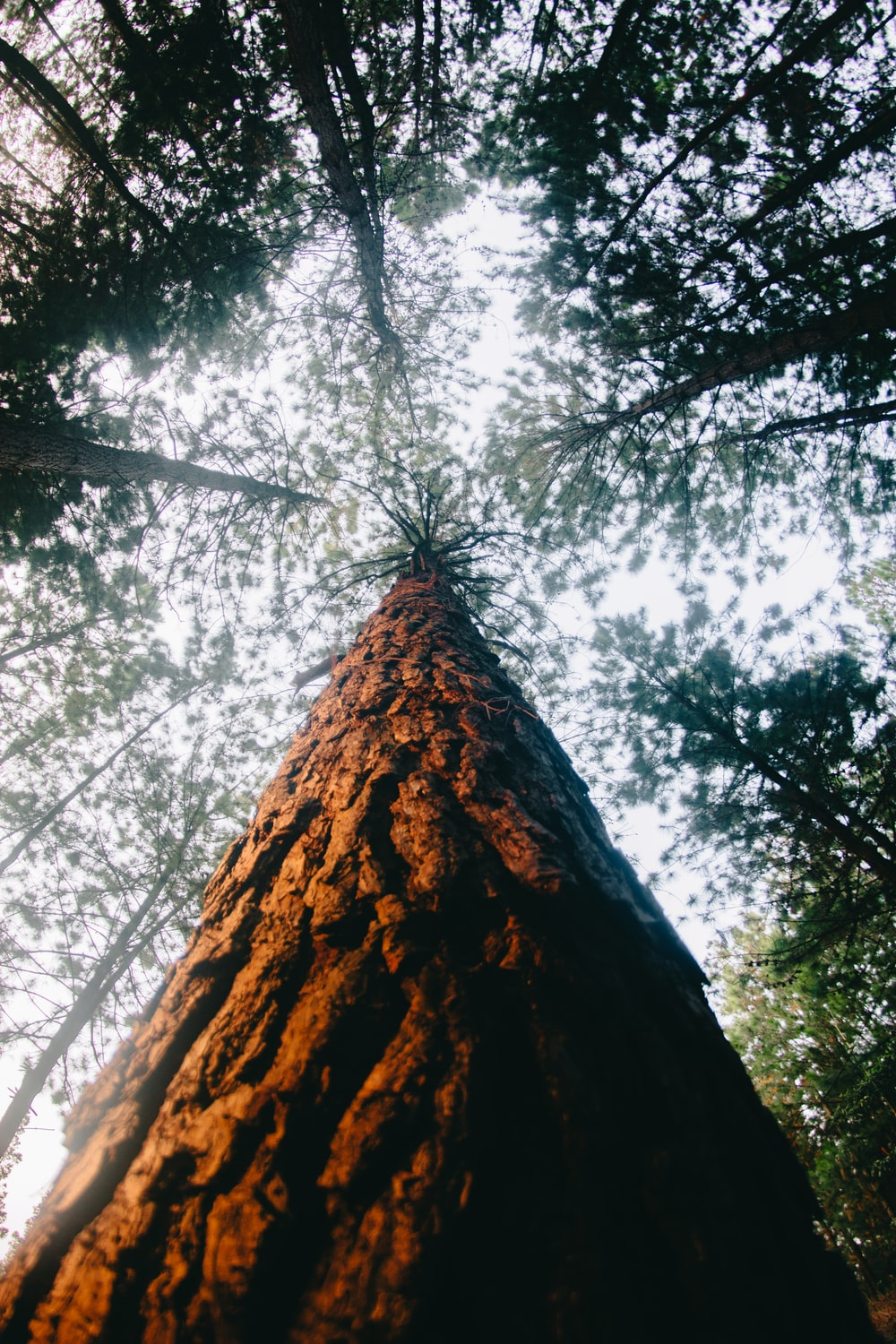 low-angle photography of brown wooden tree bark