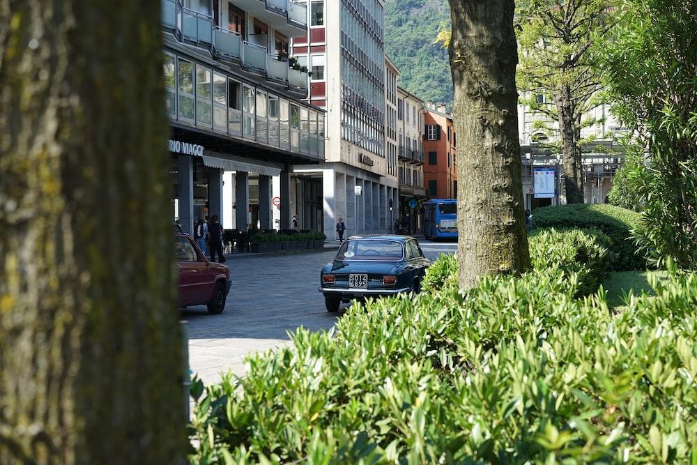 blue vehicle near trees