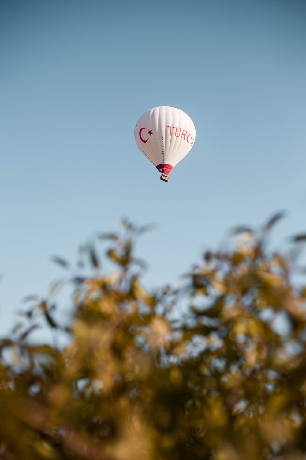 white and red hot air balloon