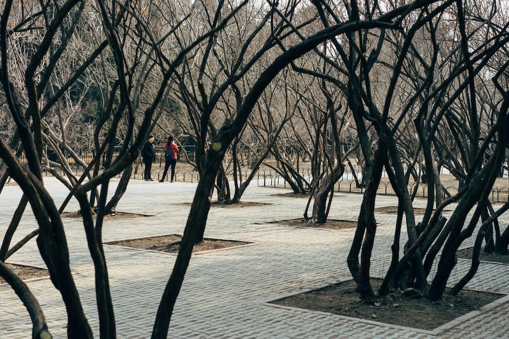 people near trees