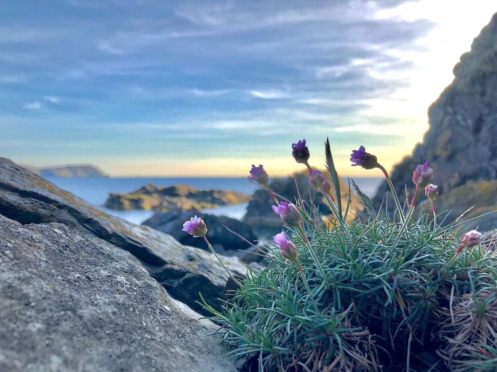 purple petaled flowers near rock