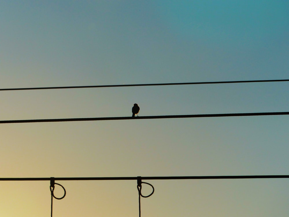 silhouette of bird on cable wire
