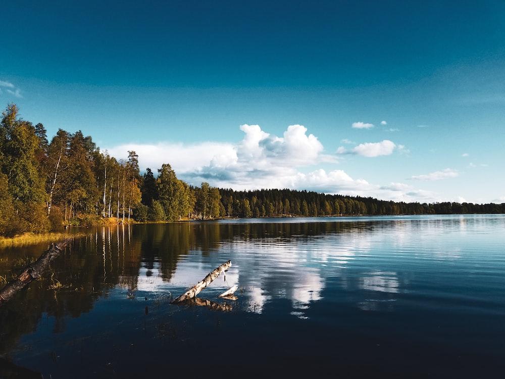 clear blue lake beside trees