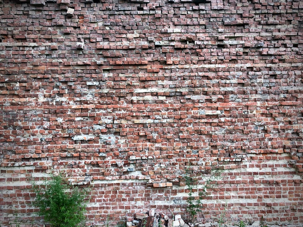 green plant near bricks wall