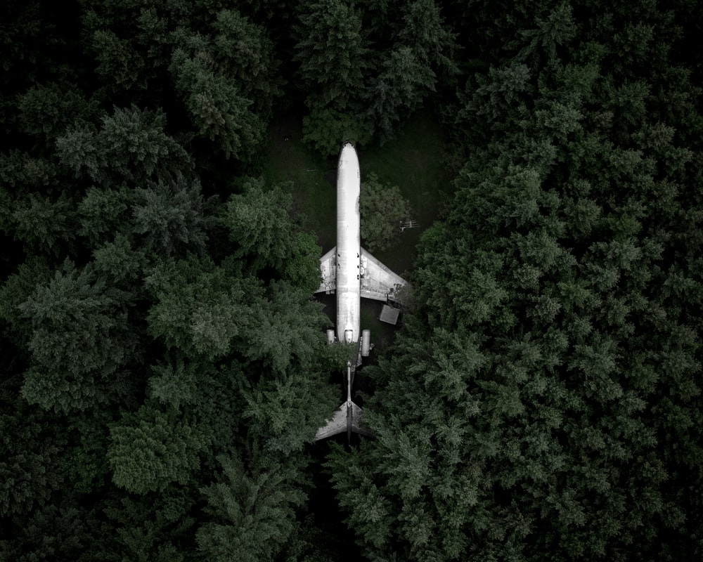 white airplane in the middle of the forest during day