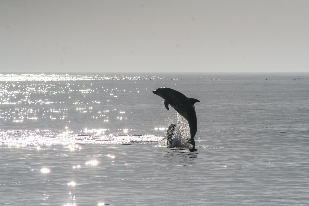 A dolphin jumping out of the sparkly ocean.