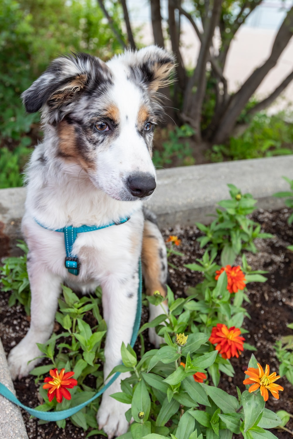 dog sitting on a flower garden