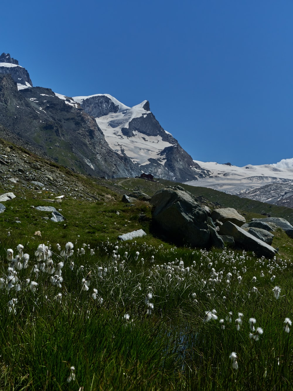 white flowers across white mountaines