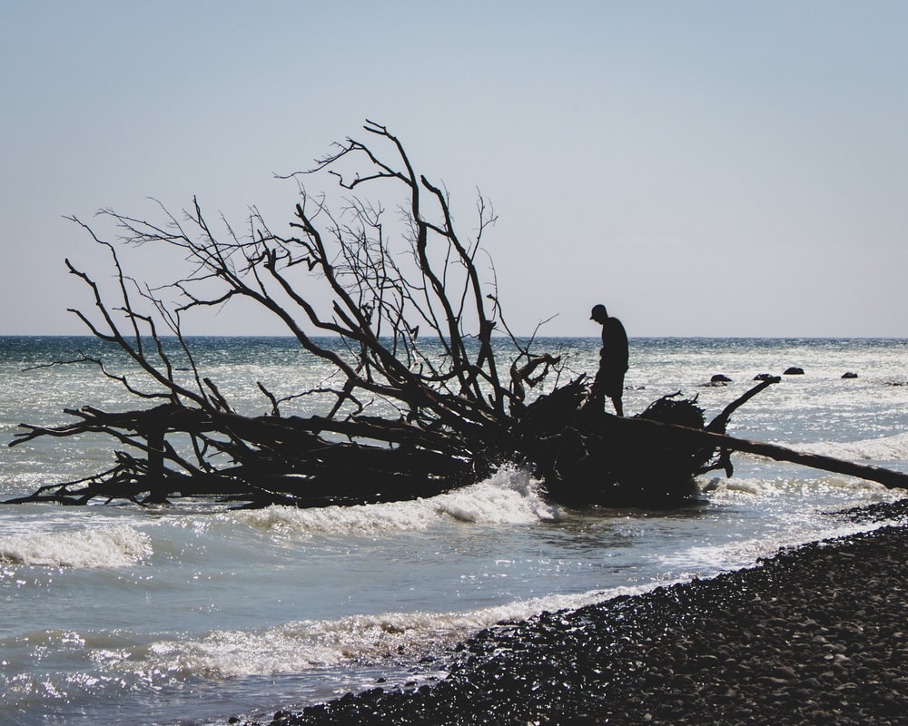 silhouette of person on fallen tree on seashore during daytime