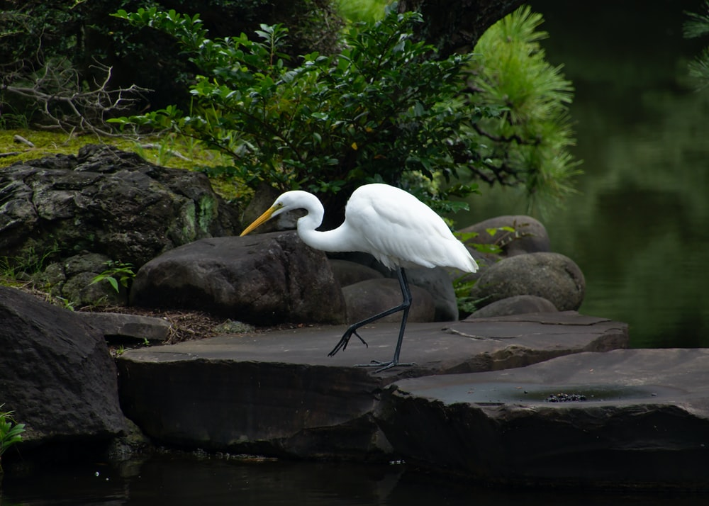 white bird on rock