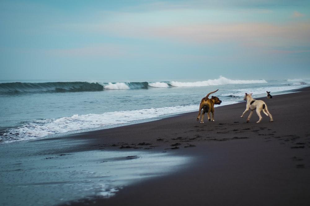 three dog on seashore