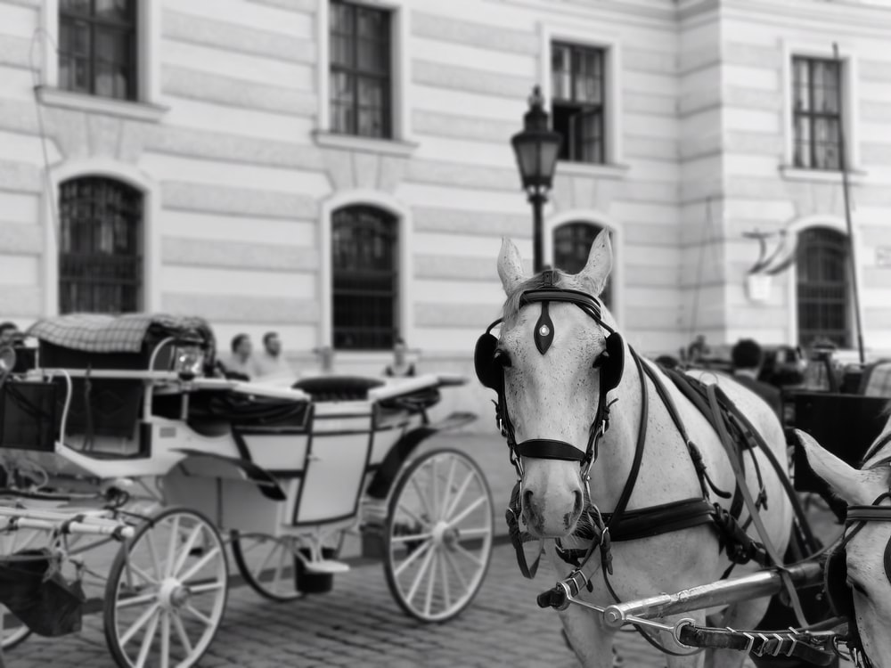 grayscale photography of horse carriages in the street