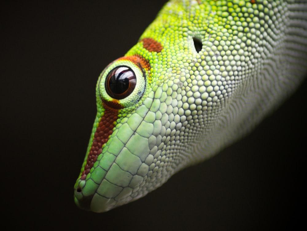 closeup photo of green and white lizard
