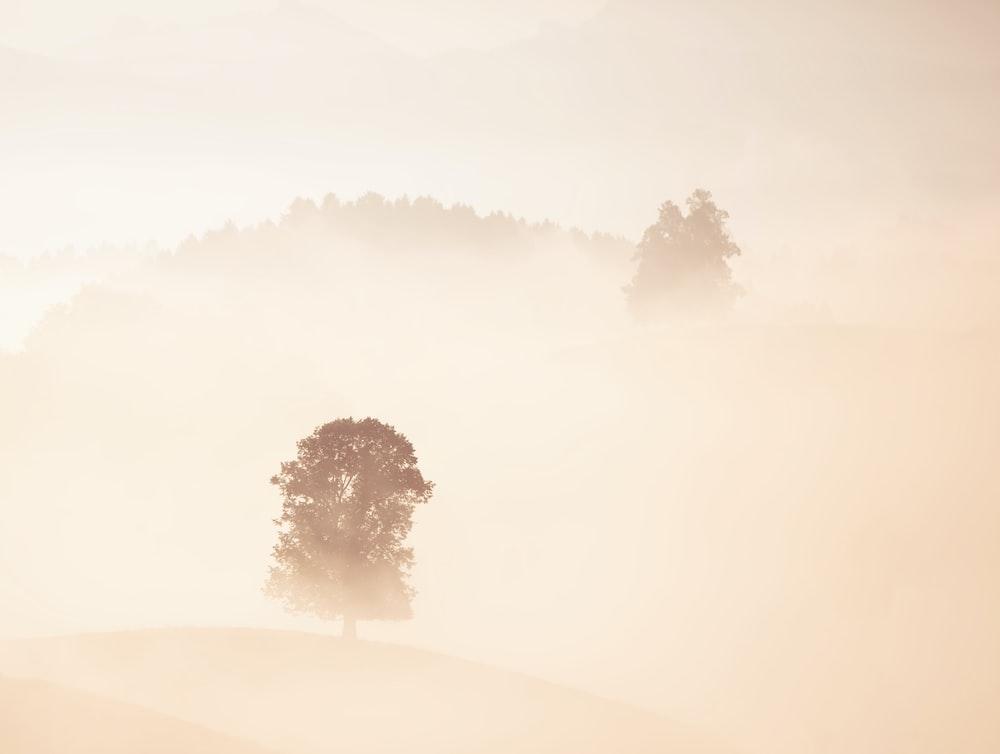trees under fog