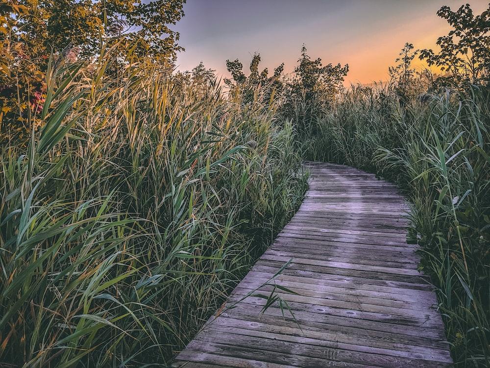 brown pathway beside grass