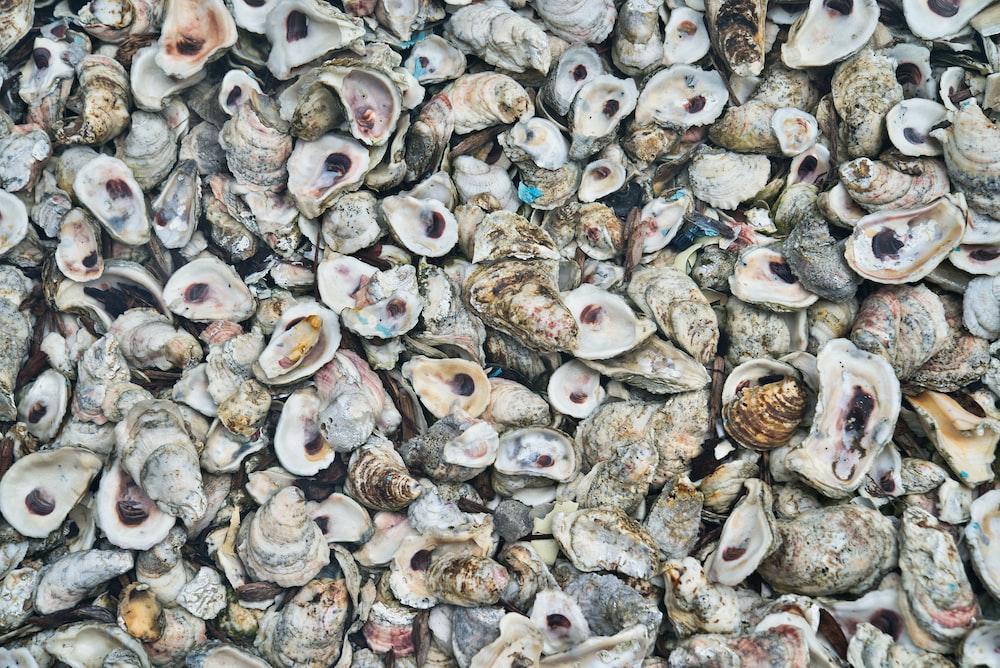 grey and white sea shells