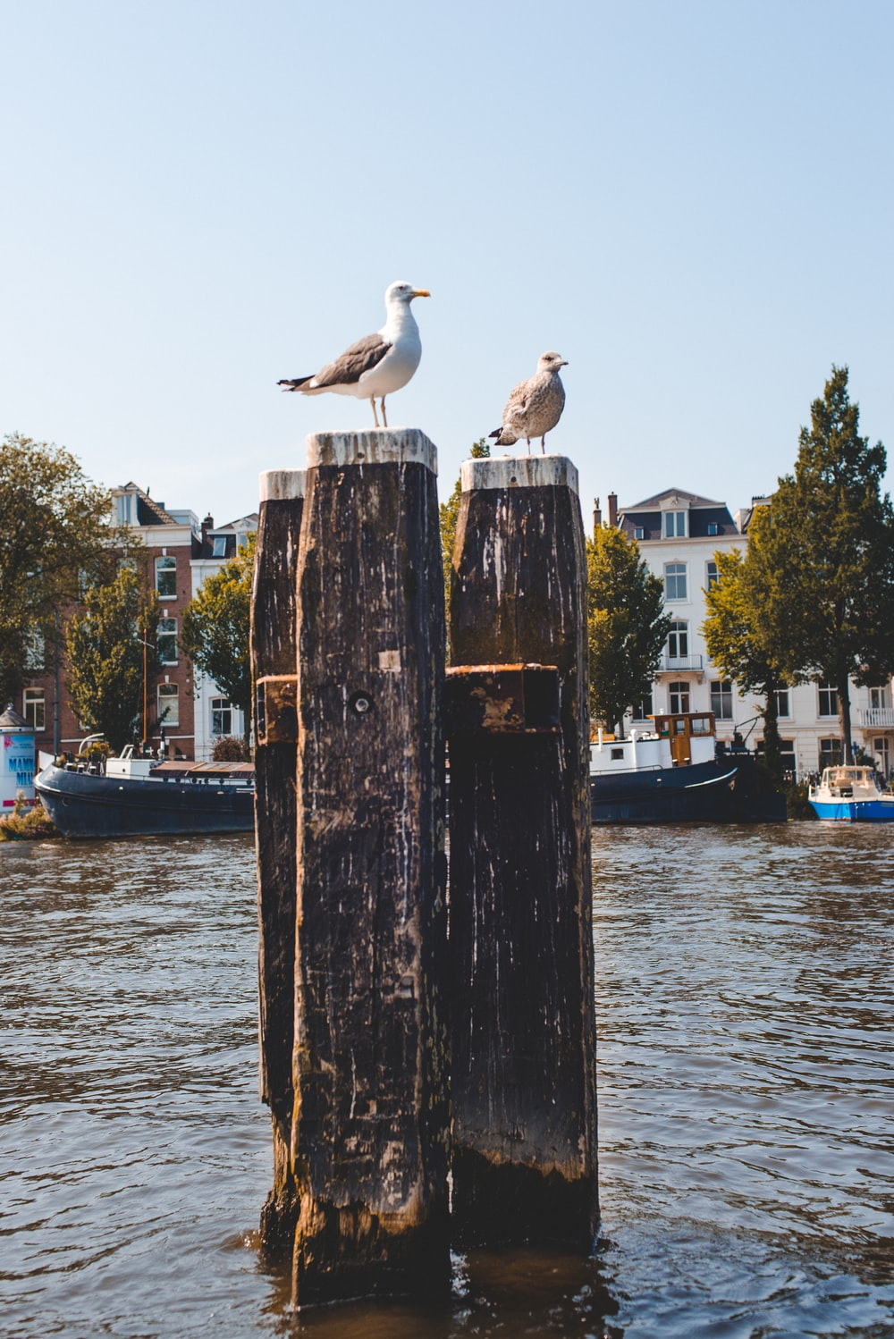 two birds sitting on wood posts in water