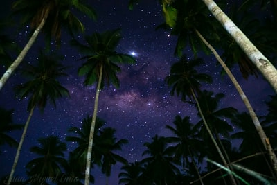coconut trees during nighttime