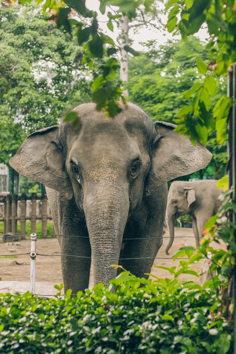 selective focus photo of elephant
