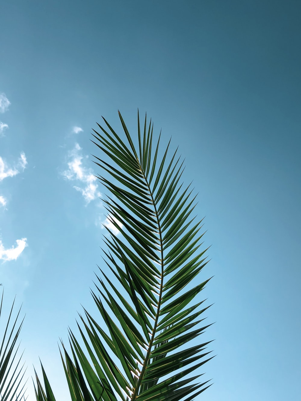 green-leafed plant during daytimne