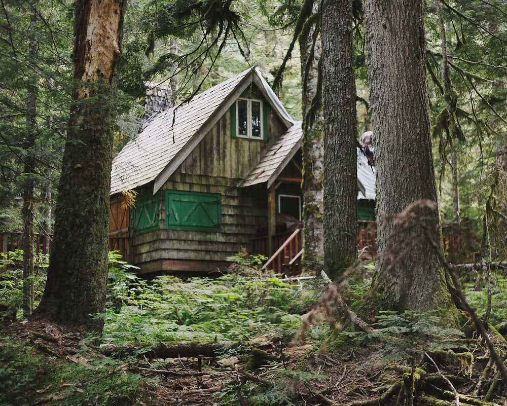 house in forest