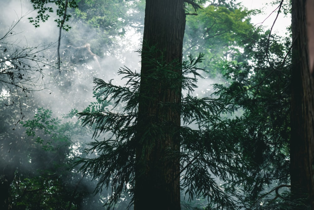 photo of bark tree