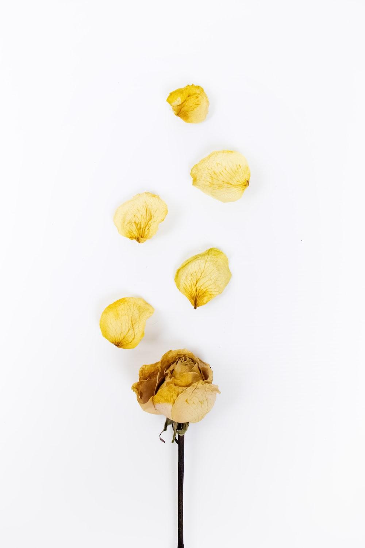 yellow petaled flowers