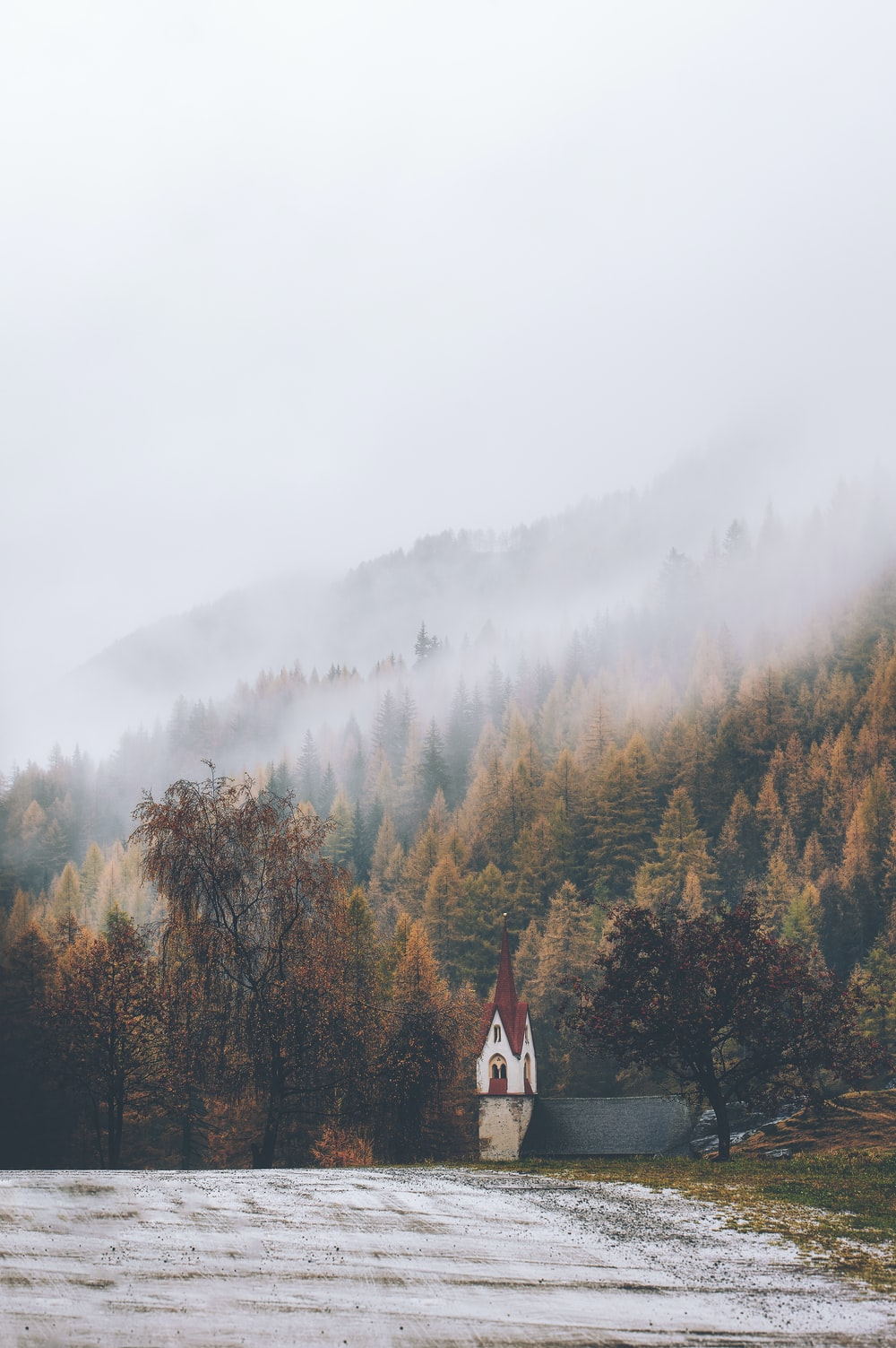 fog covering forest