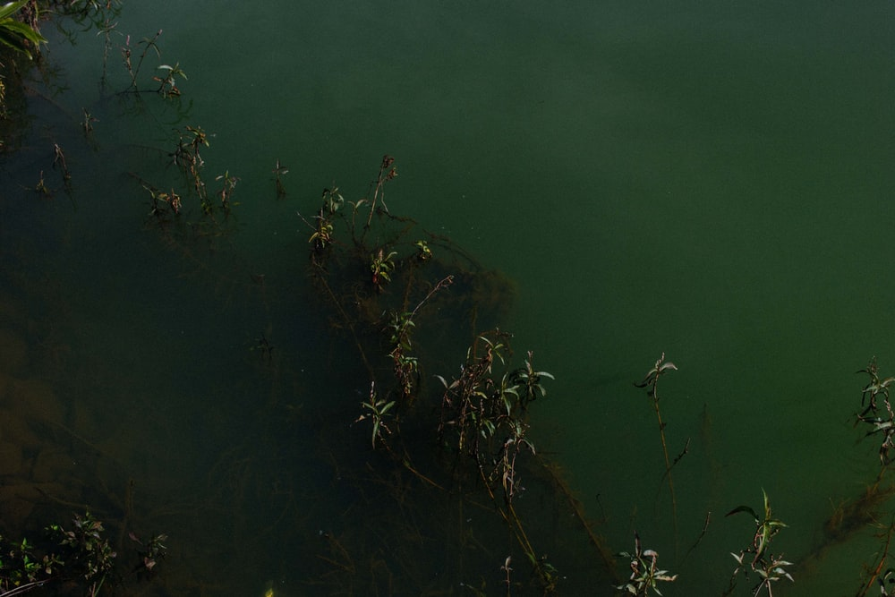 green plant on calm water
