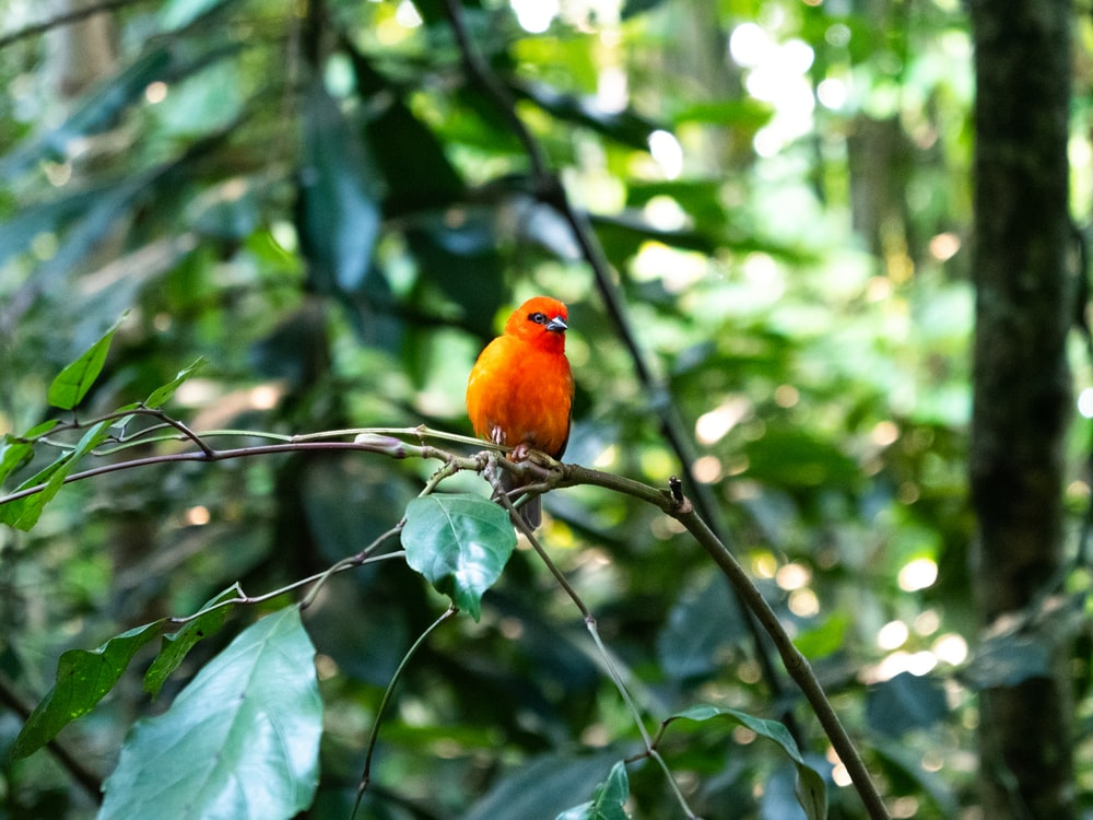closeup photo of orange bird on tree branch