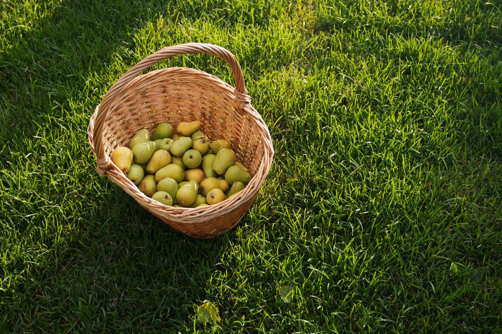 one basket of green fruits