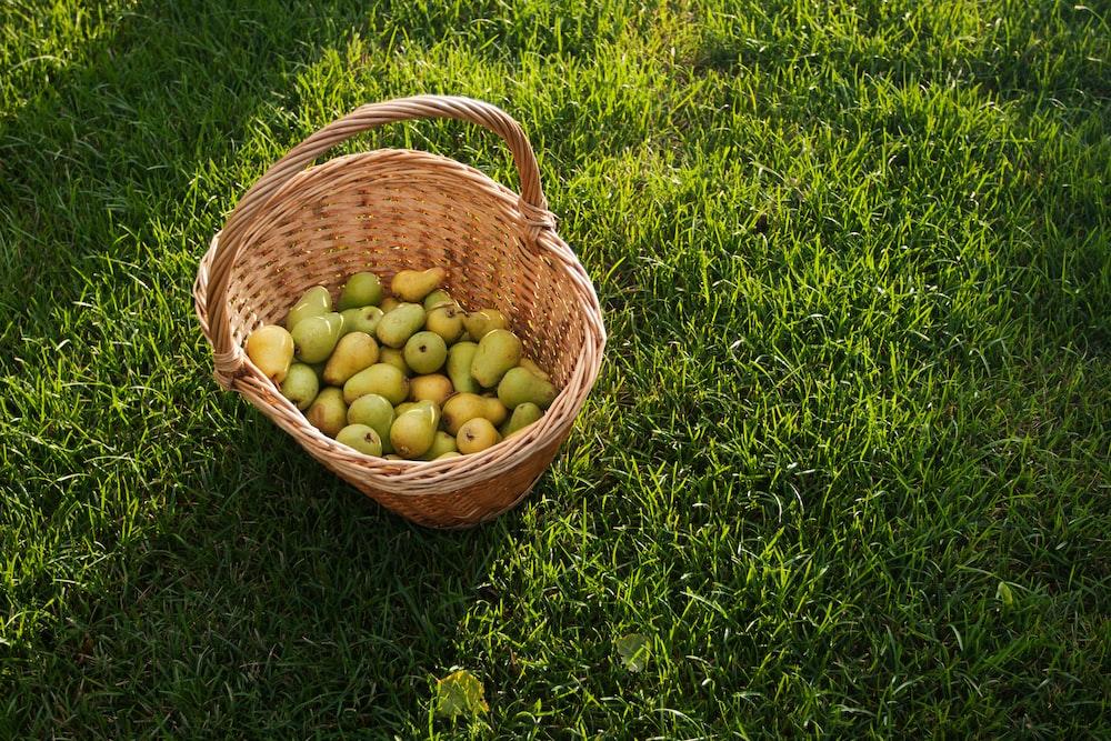 Every Garden Aluminium Basket Fruit Picker: