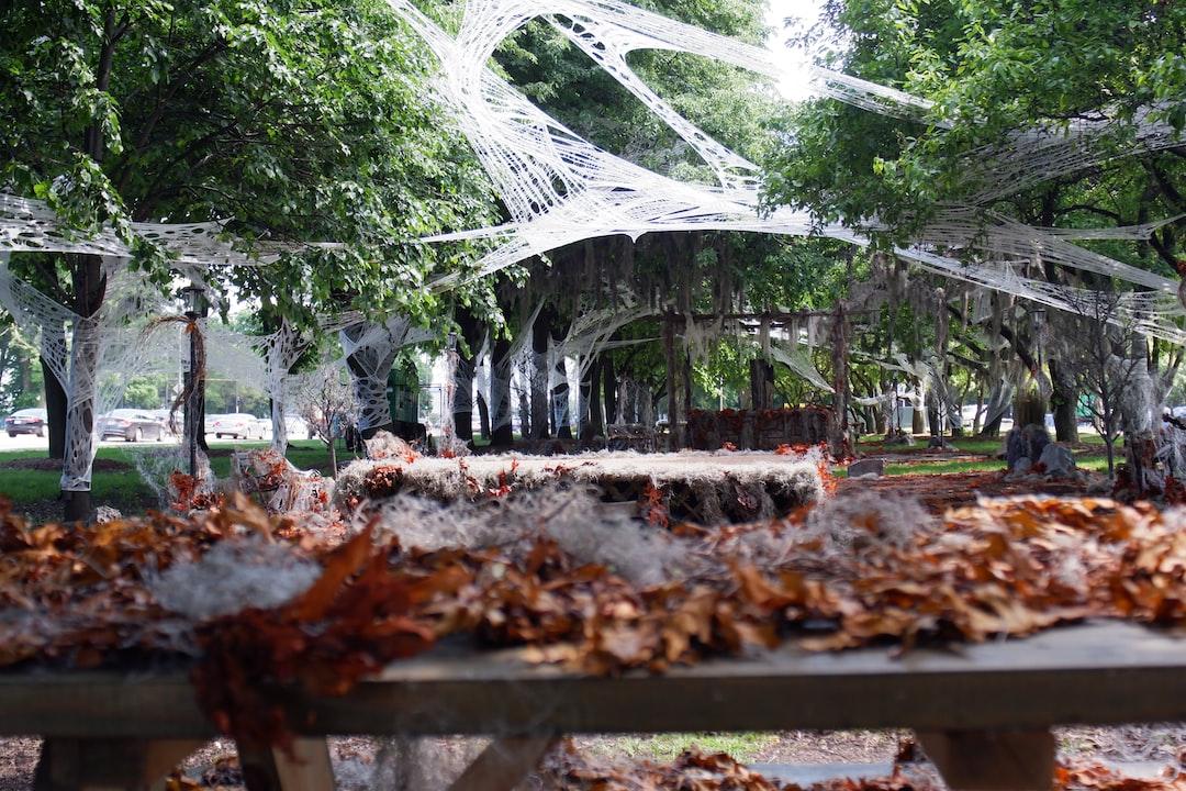 Spider 'w web for a Pokemon festival in Chicago.