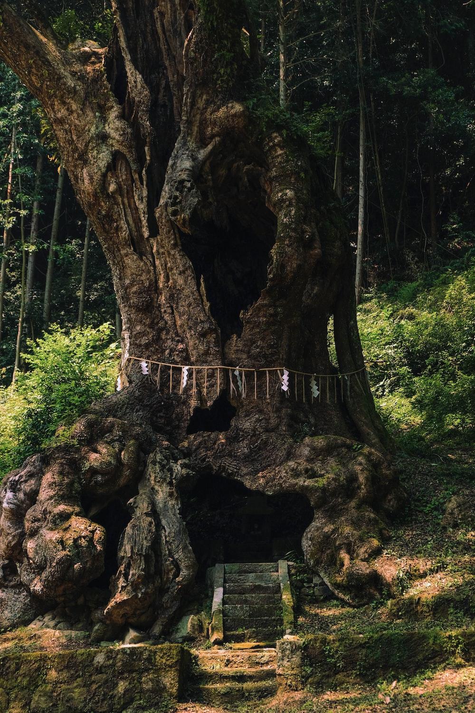 shallow focus photo of tree
