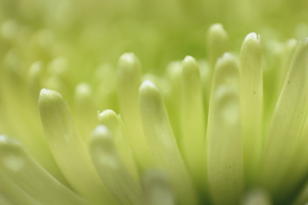 close-up photography of green cluster flower
