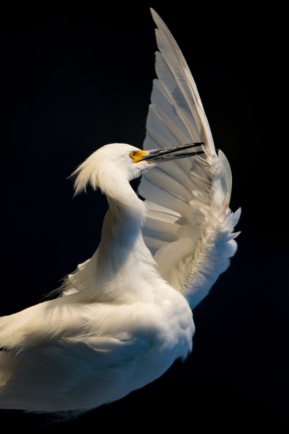 selective focus photo of white and black bird