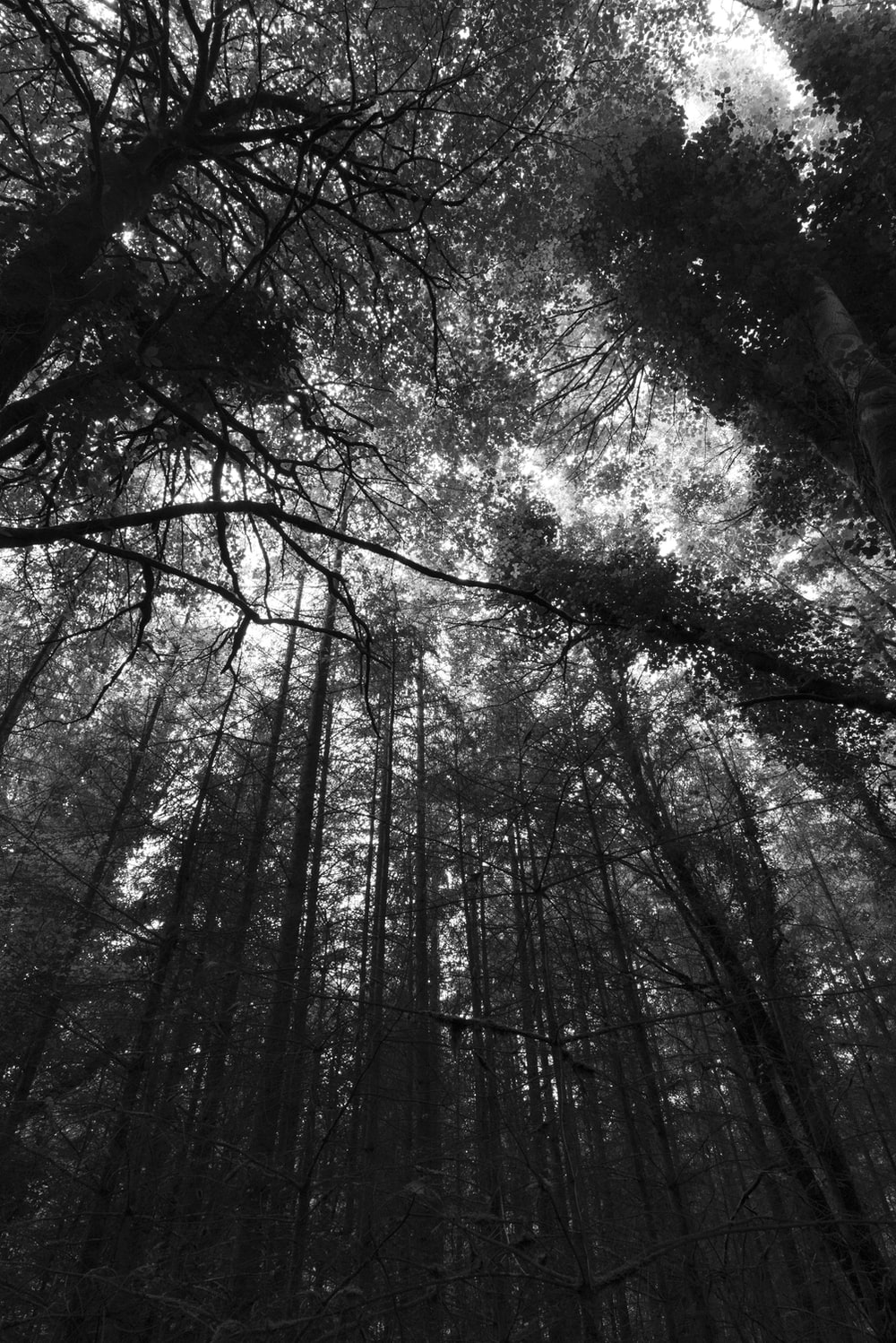 grayscale low angle photography of trees