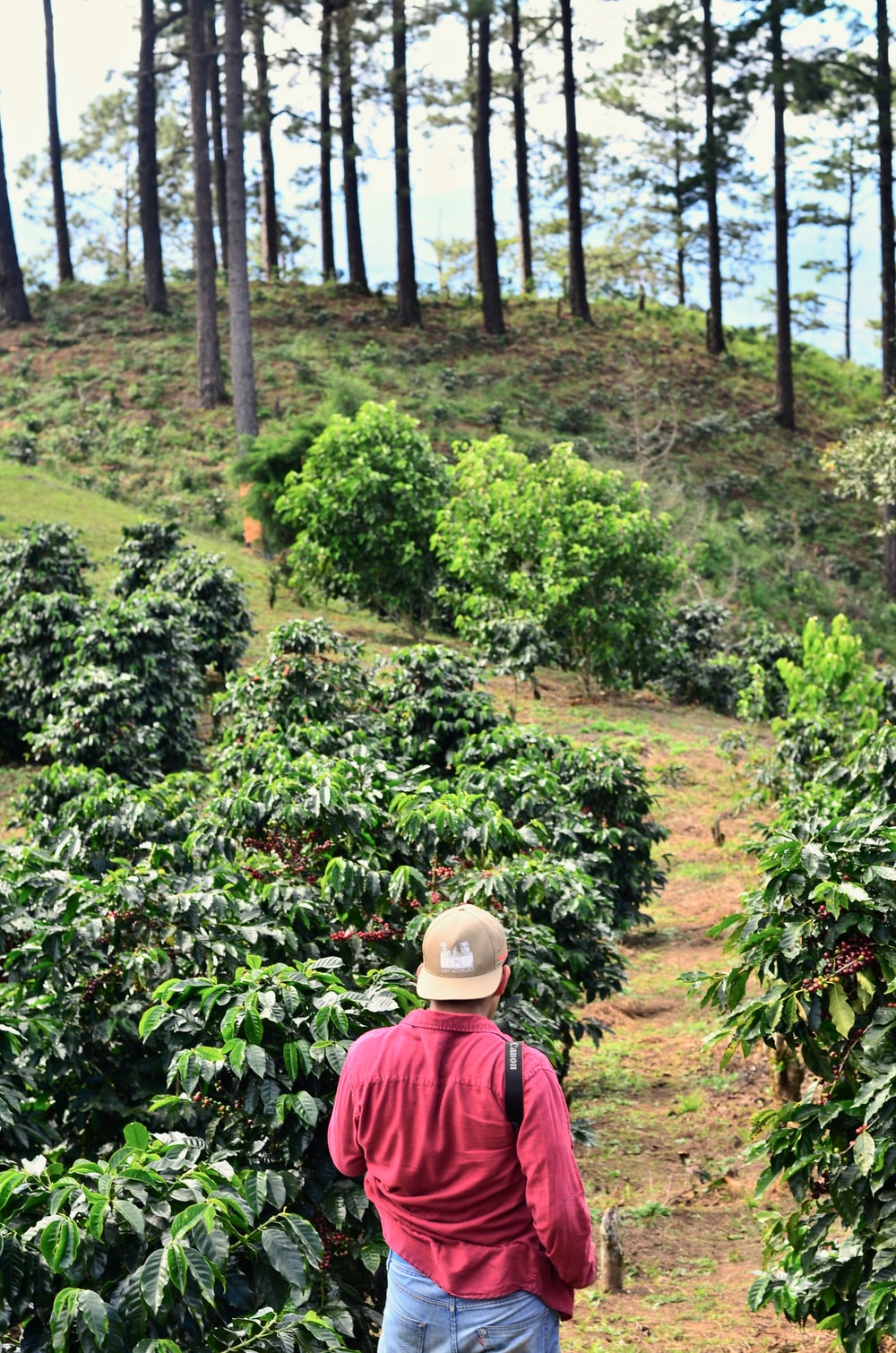 man walking on walkway beside plants