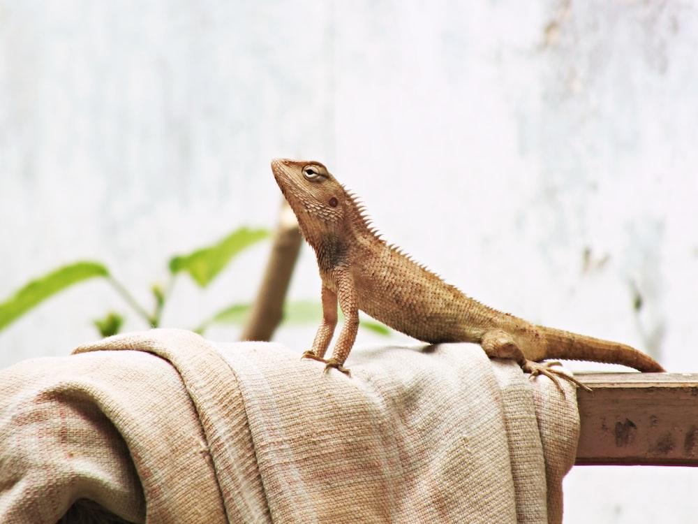 brown lizard on brown textile