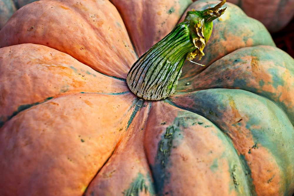 orange and green pumpkin