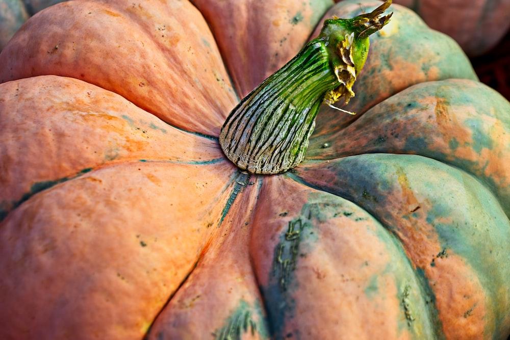 orange and green pumpkin