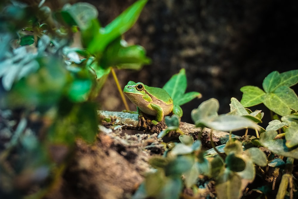 macro photography of green and brown frog on green plant