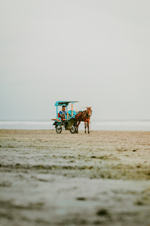 man riding carriage on beach