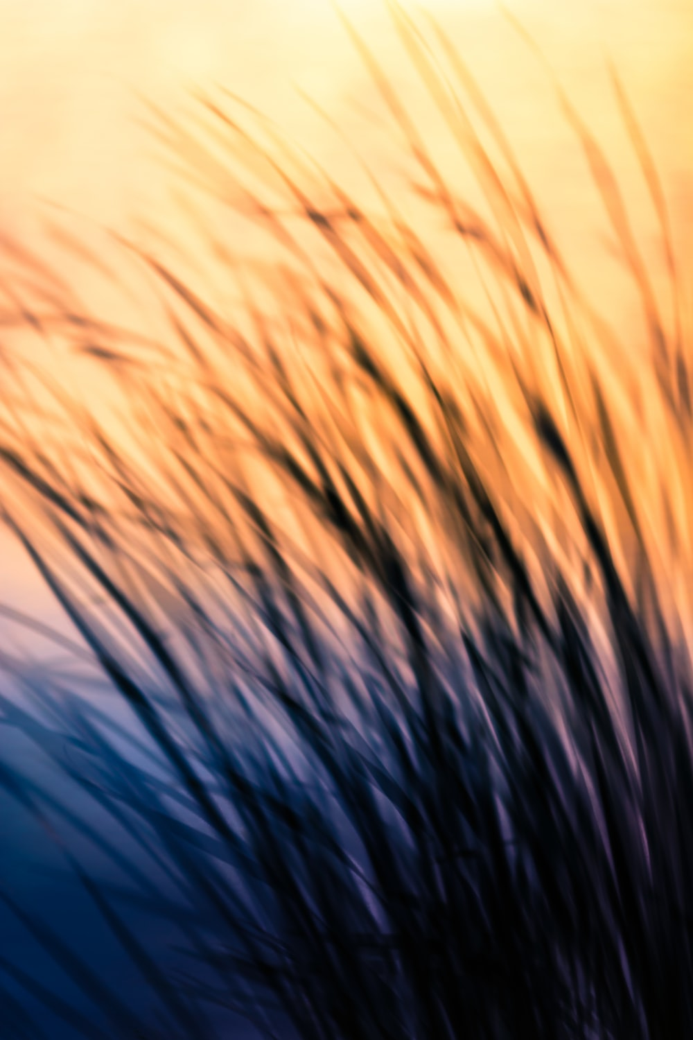 silhouette of grass during sunrise