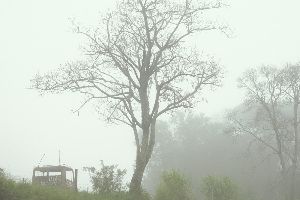 tree during foggy days