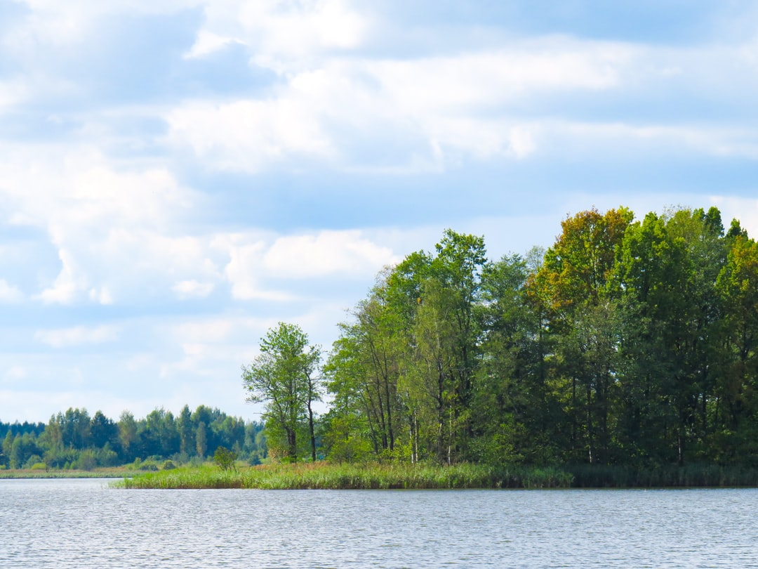 A small island in the forest lake